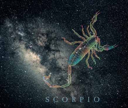ScorpioScorpion.jpg